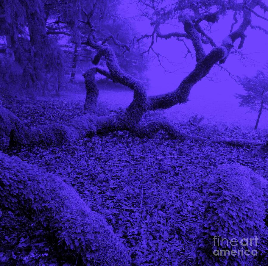 Blue Photograph - Blue Dreaming Moon by JoAnn SkyWatcher