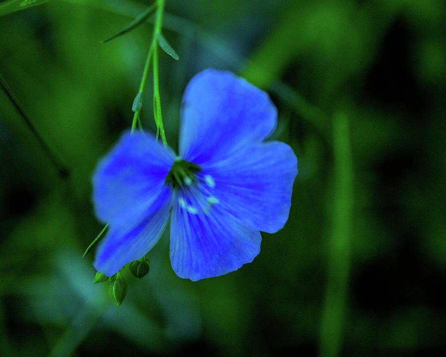 Blue Photograph - Blue Dreams 2 by Shiela Kowing