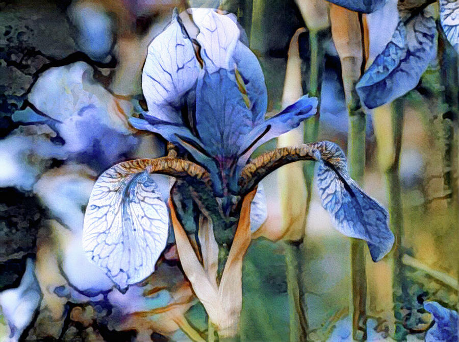 Irises Photograph - Blue Dutch Iris by Susan Maxwell Schmidt