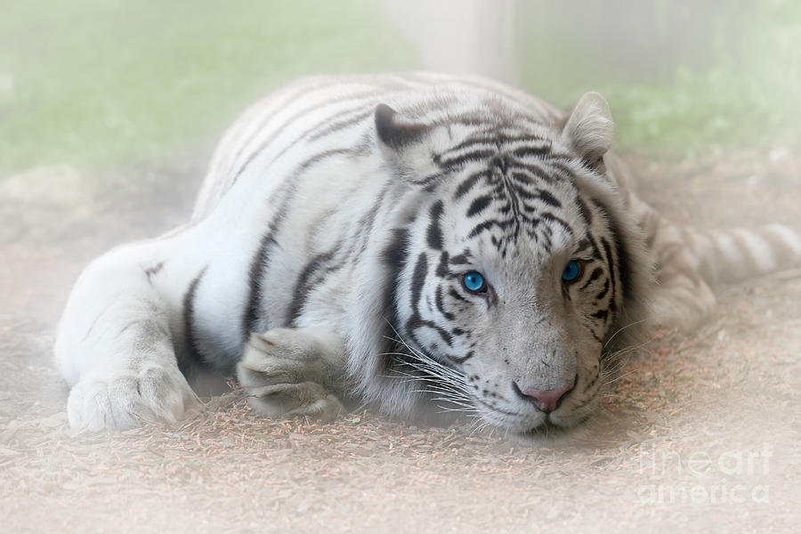Albino Photograph - Blue Eyes by Jeannie Burleson
