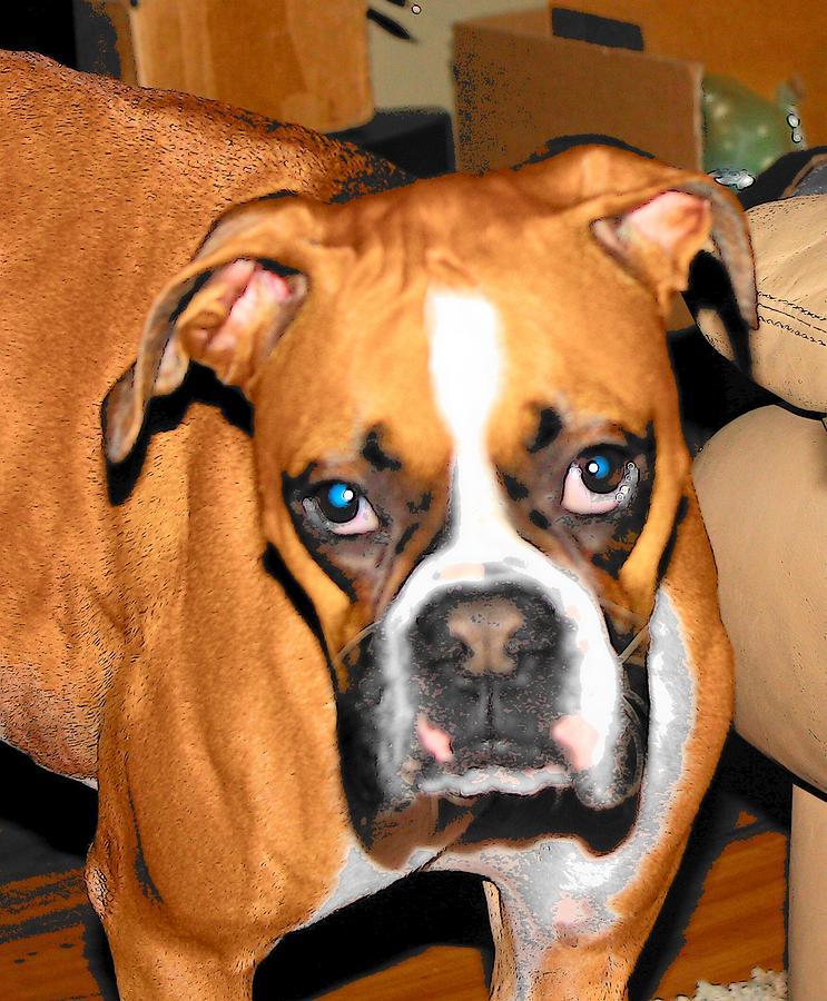 Dog Photograph - Blue Eyes by Mark Cheney