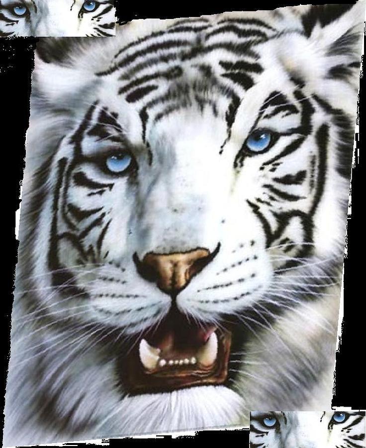 Tiger Digital Art - Blue Eyes  by Robert Martin