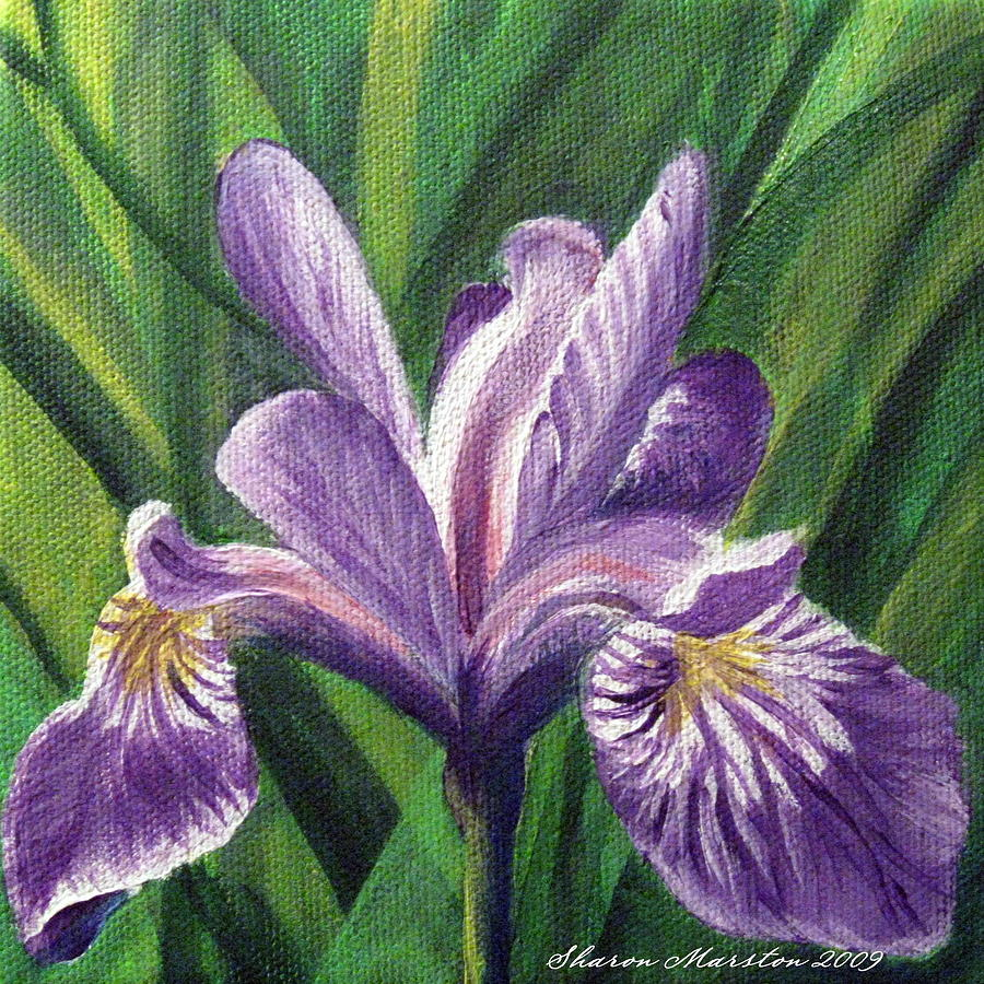 Blue flag iris painting by sharon marcella marston blue flag iris painting blue flag iris by sharon marcella marston izmirmasajfo