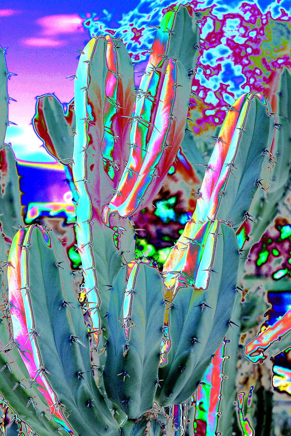 Blue Flame Cactus Abstract Photograph By M Diane Bonaparte