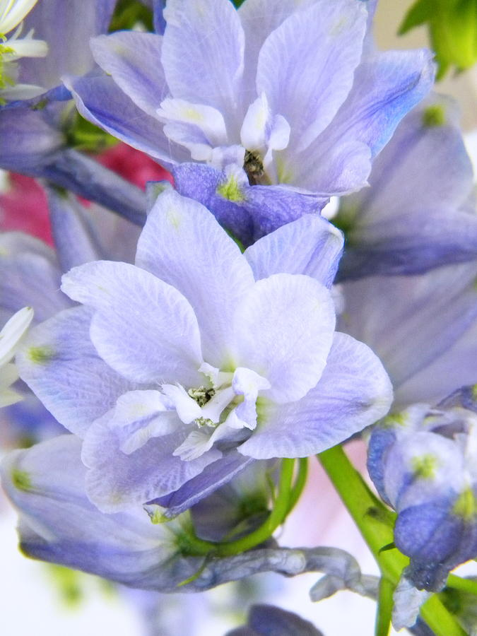 Blue Flowers Photograph - Blue Flowers by Alyona Firth