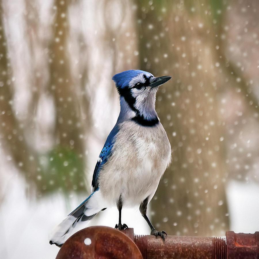 Blue Photograph - Blue For You by Evelina Kremsdorf