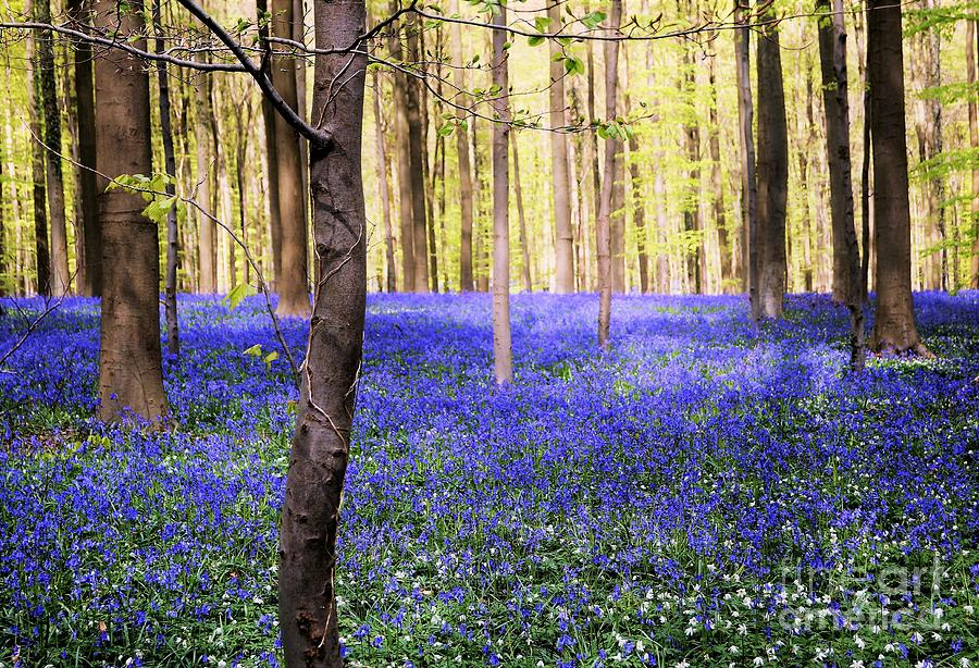 Blue Forest Photograph - Blue Forest In Shadow by Andrea Rea