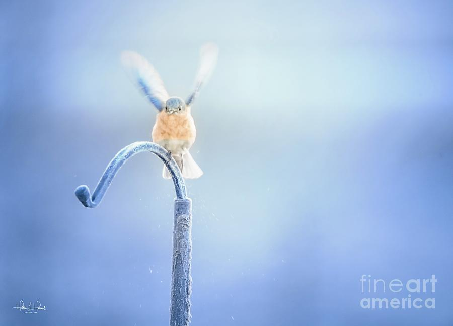 Blue Frost Photograph by Heather Hubbard