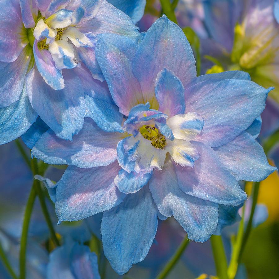 Blue Photograph - Blue Glory by Louis Rivera