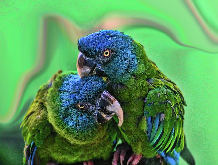 Parrot Photograph - Blue Headed Macaws by Allen Beatty