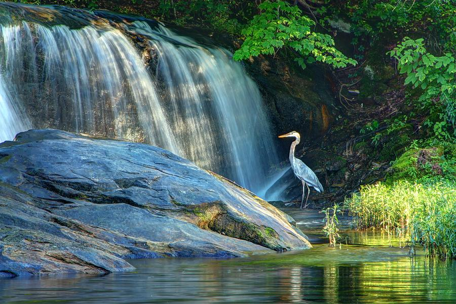 Blue Heron at Lake Brashears by Angela Comperry