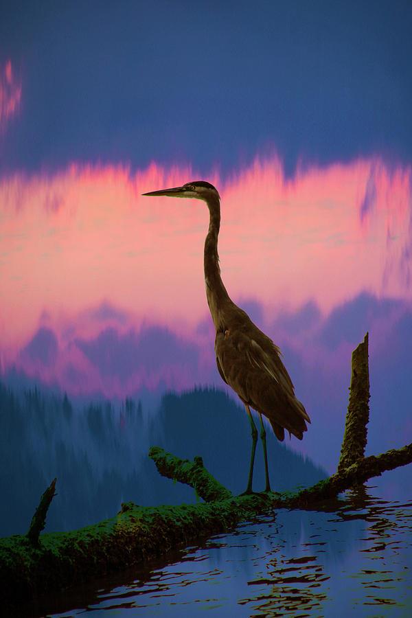 Blue Heron At Sunset Photograph