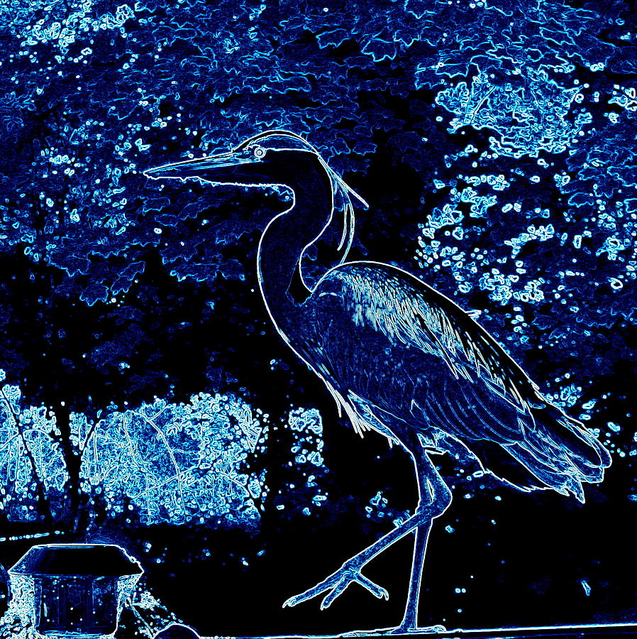 Heron Photograph - Blue Heron by James Hill