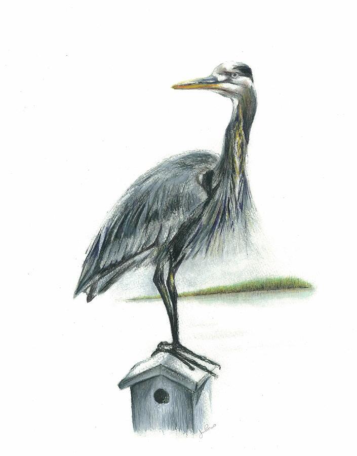 Heron Mixed Media - Blue Heron  by Jim  Romeo