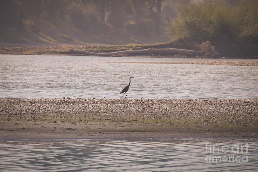 Blue Heron Photograph - Blue Heron On The Yellowstone by Shevin Childers