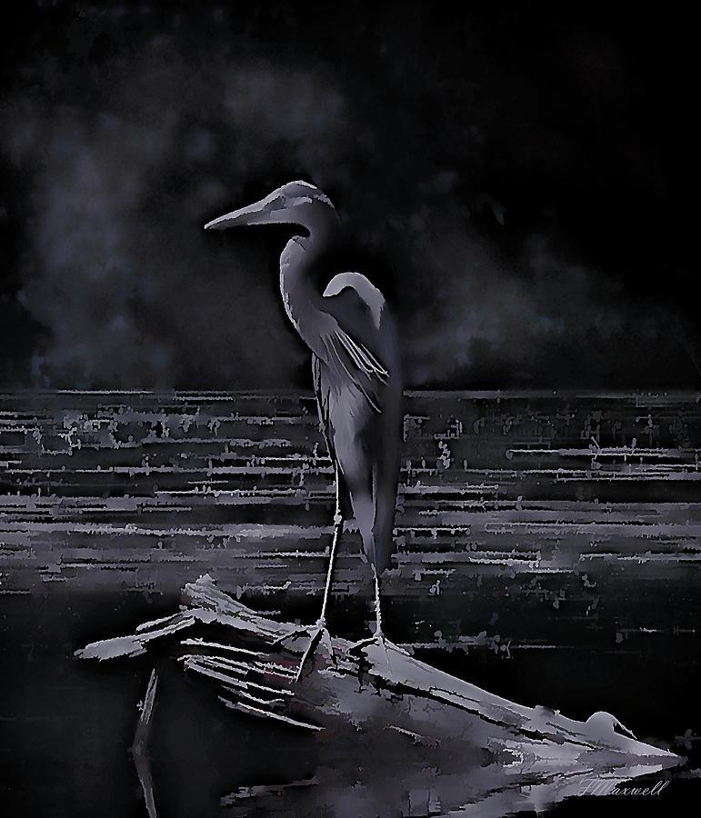 Heron Photograph - Blue Heron Pose by Frank Maxwell