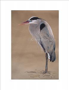 Bird Drawing - Blue Heron by Robert Ryan
