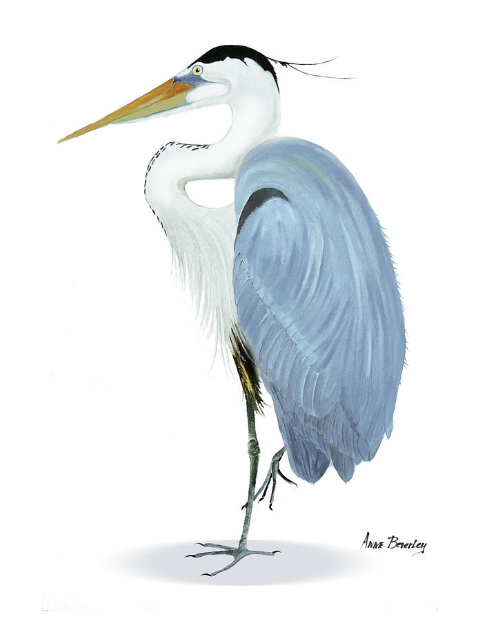 Blue Heron with no background by Anne Beverley-Stamps