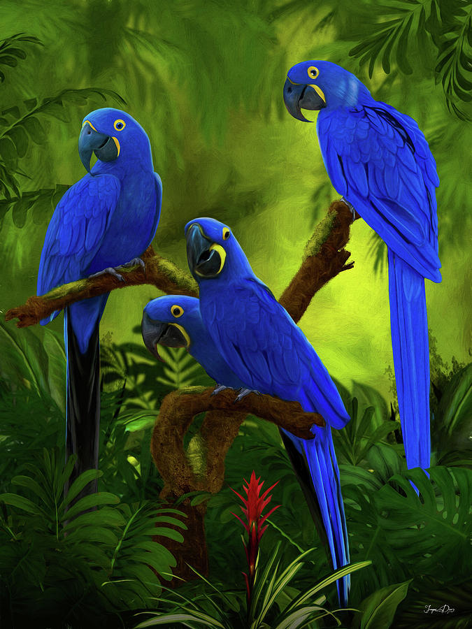 blue hyacinth macaw painting by jurgen doelle