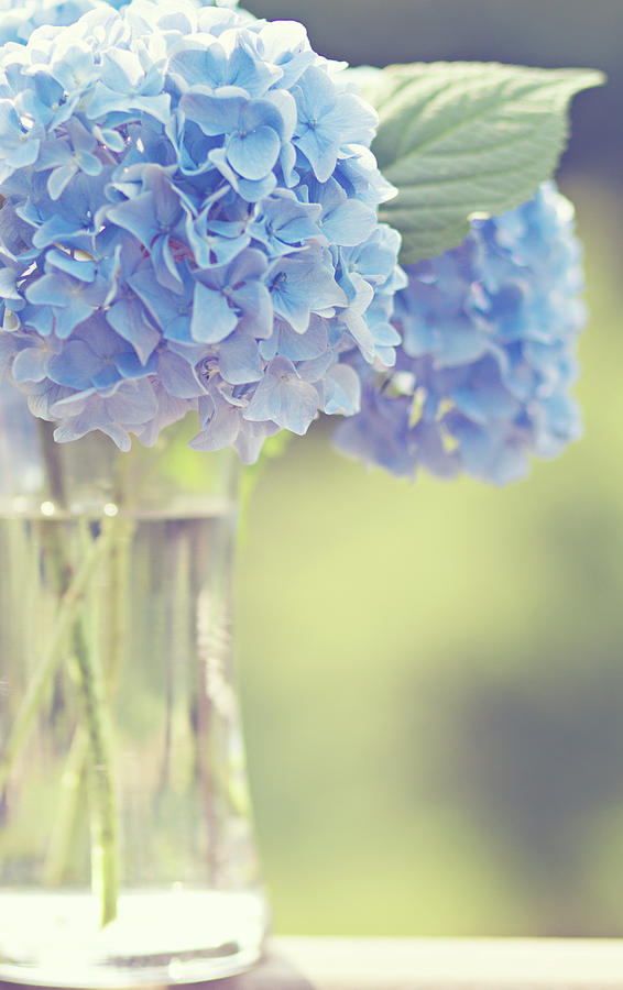 Vertical Photograph - Blue Hydrangea by Photography by Angela - TGTG