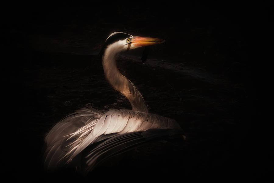 Great Blue Heron Photograph - Blue in Darkness by Michael and Lisa McStamp