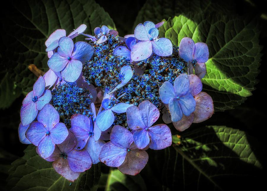 Blue In Nature by ELAINE MALOTT