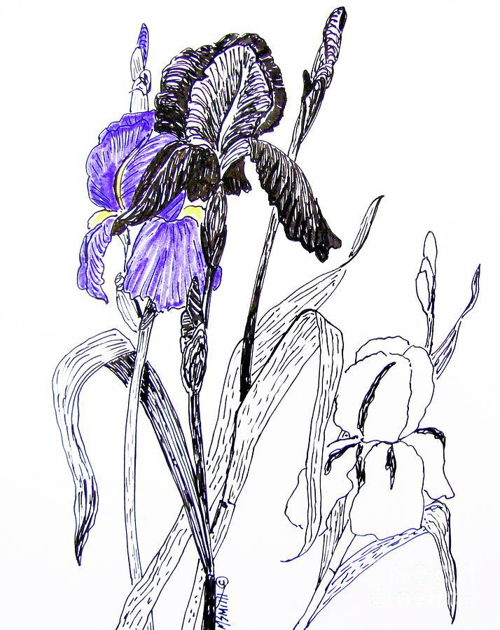 Iris Drawing - Blue Iris by Marilyn Smith