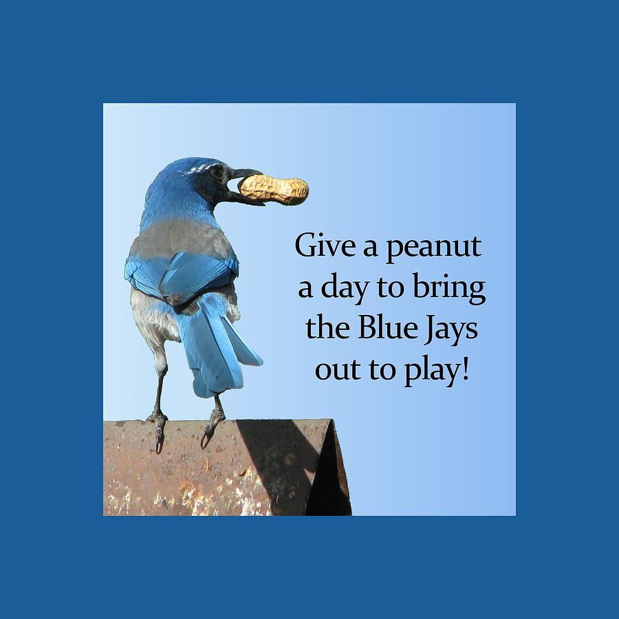 Animals Mixed Media - Blue Jay And A Peanut by Patricia Barmatz