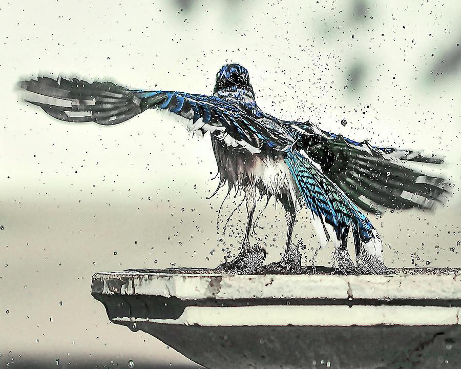 Blue Jay Bath Time by Scott Cordell