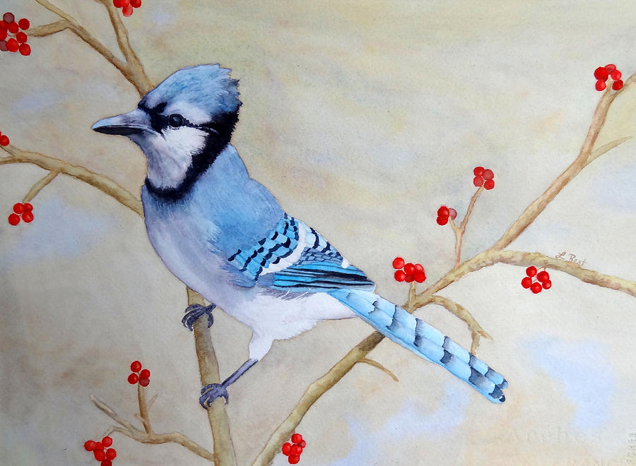 Blue Jay Painting - Blue Jay by Laurel Best