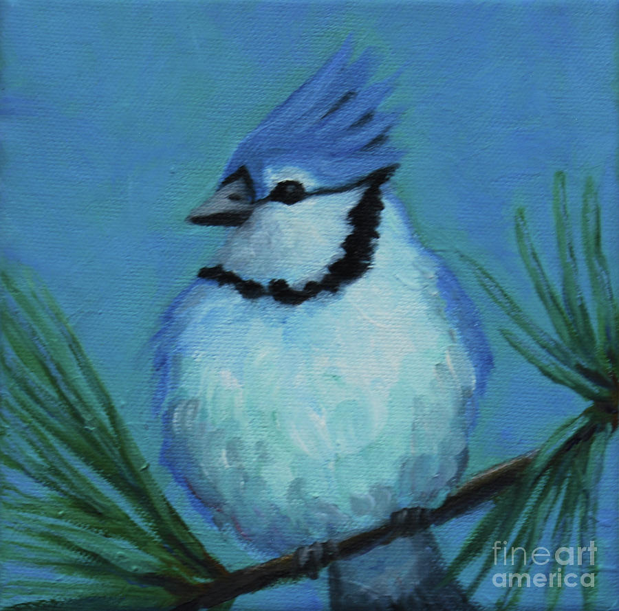 Blue Jay on Pine by Victoria Page
