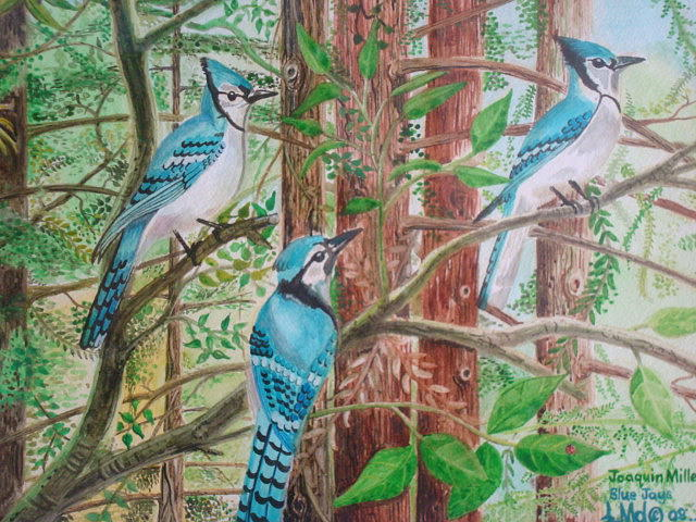 Blue Jays Painting by Jorge Luis  Iniguez