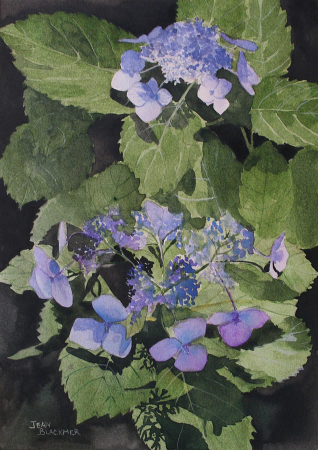 Flowers Painting - Blue Lace by Jean Blackmer