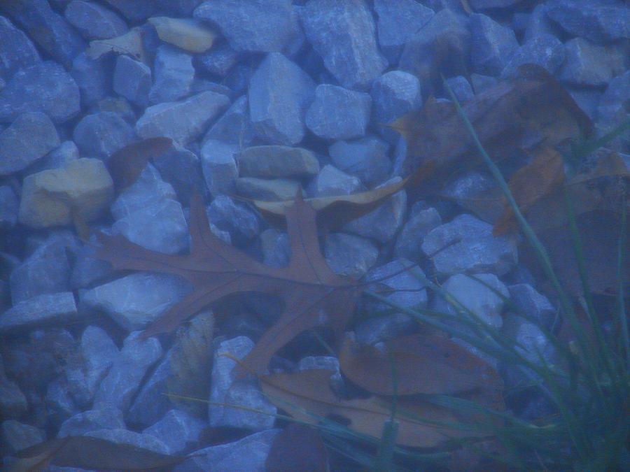 Blue Leaf Photograph by Luciana Seymour