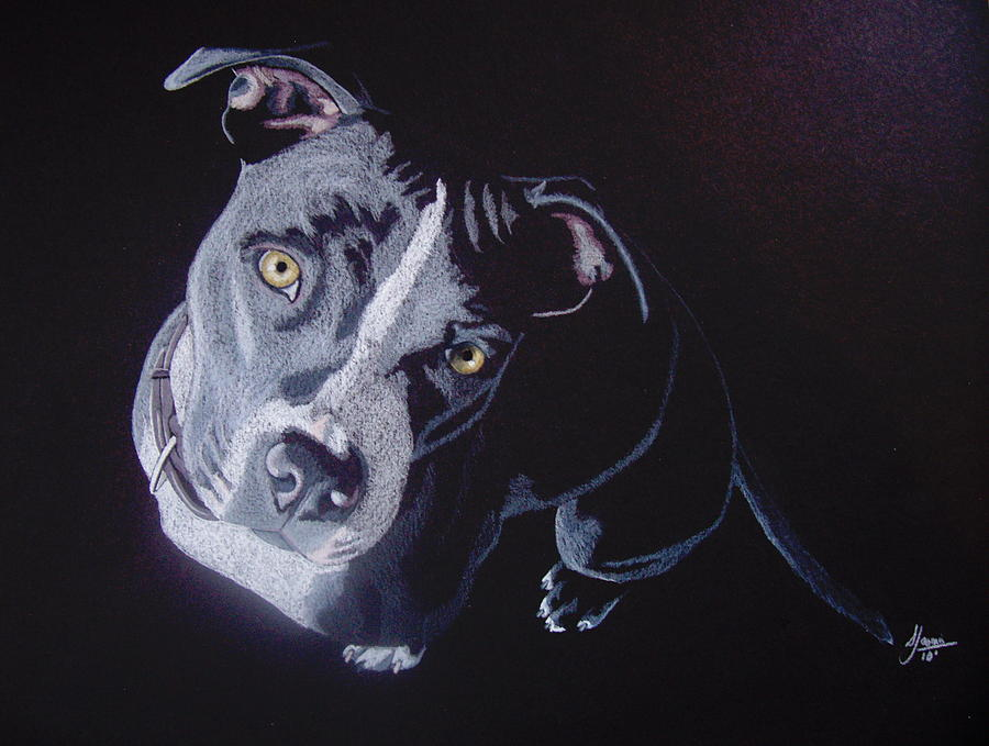 Pit Bull Drawing - Blue Light by Stacey Jasmin