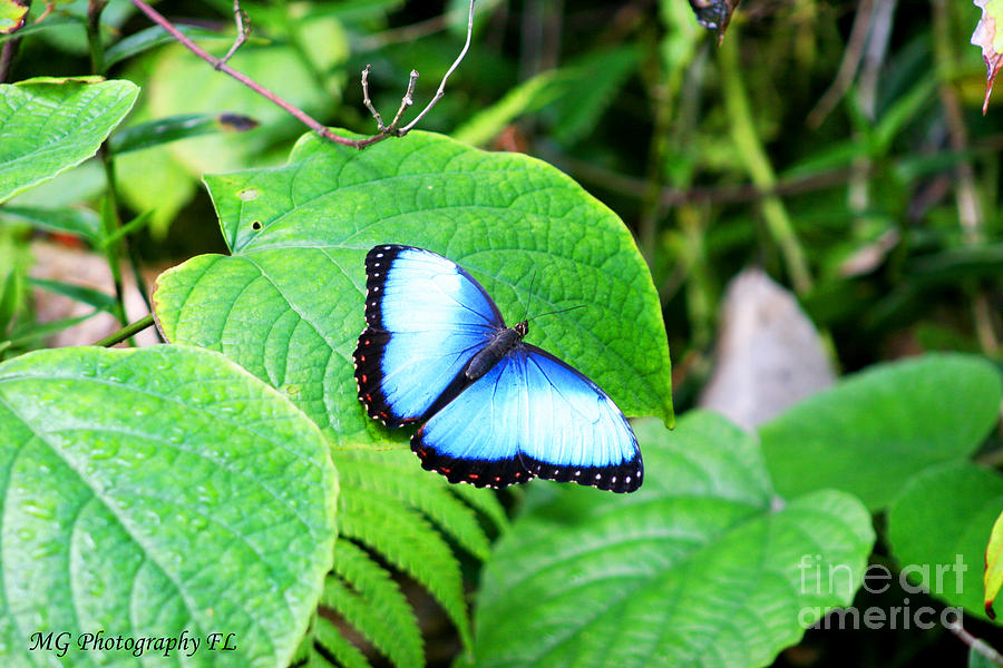Blue Photograph - Blue by Marty Gayler