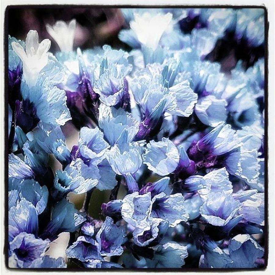 Blue Melancholia. #flowerart Photograph by Mr Photojimsf