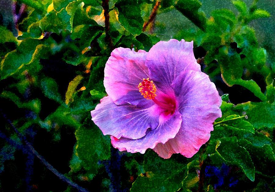 Flower Photograph - Blue Moon Hibiscus by Steve Karol