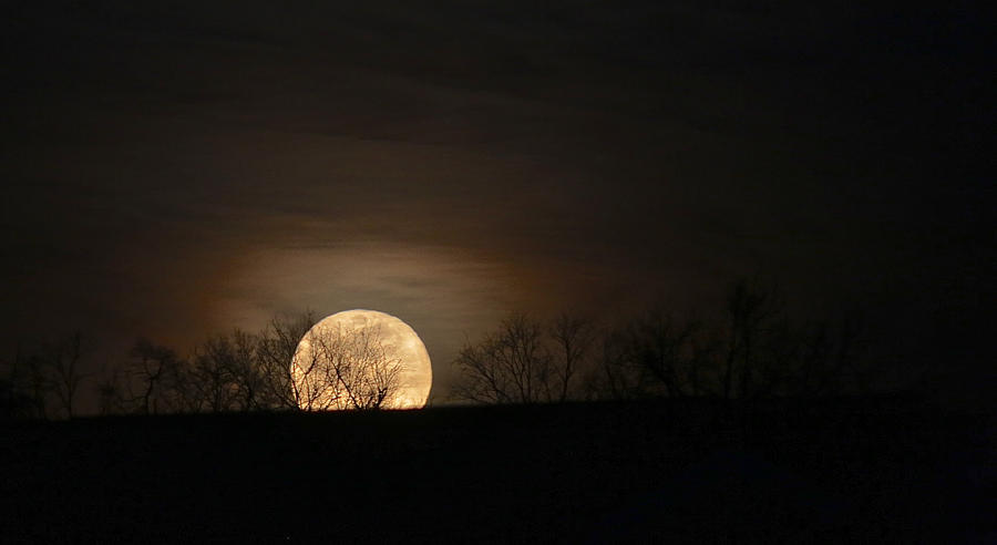 Blue Moon Rising by Donna Quante
