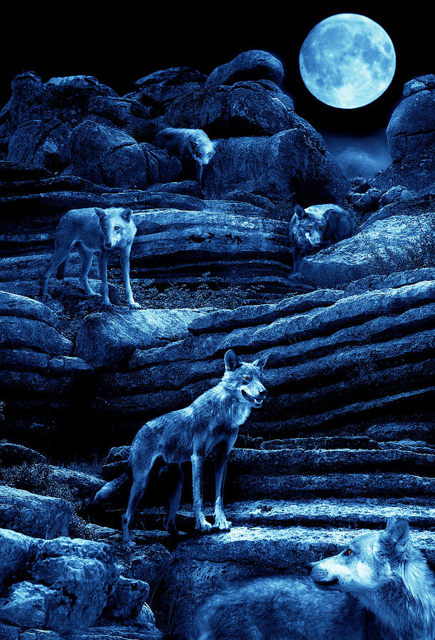 Wolf Photograph - Blue Moon Wolf Pack by Mal Bray