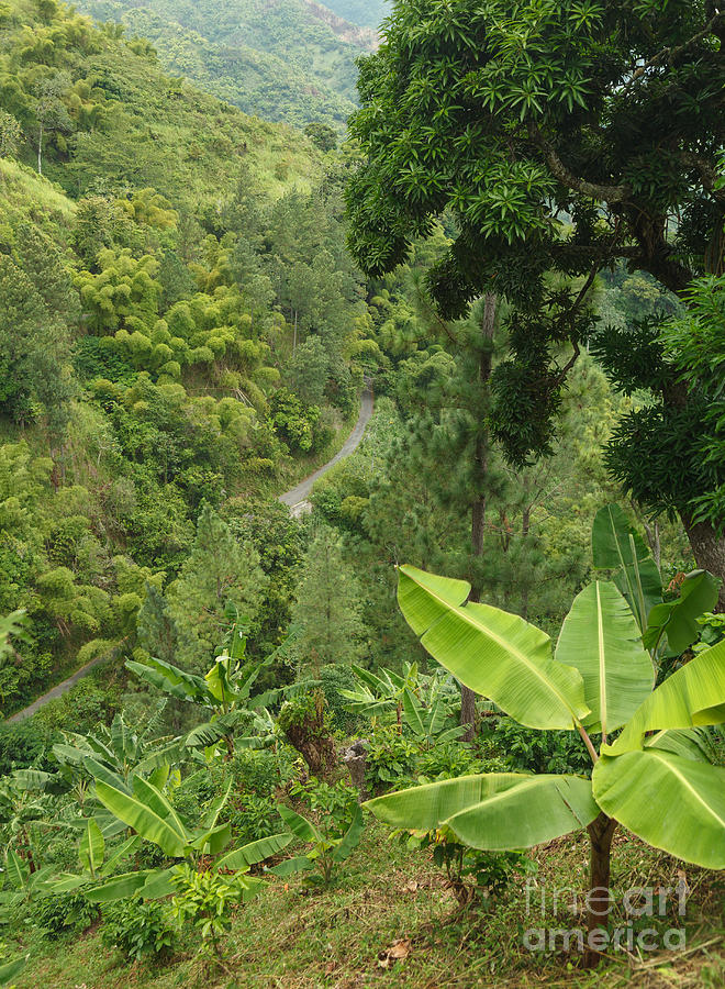 Blue Mountain Coffee Grows Where? by Charles Kozierok