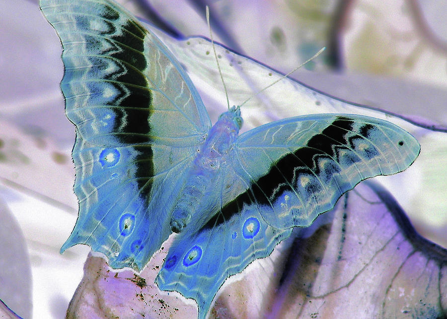 Butterfly Photograph - Blue Negative by JAMART Photography