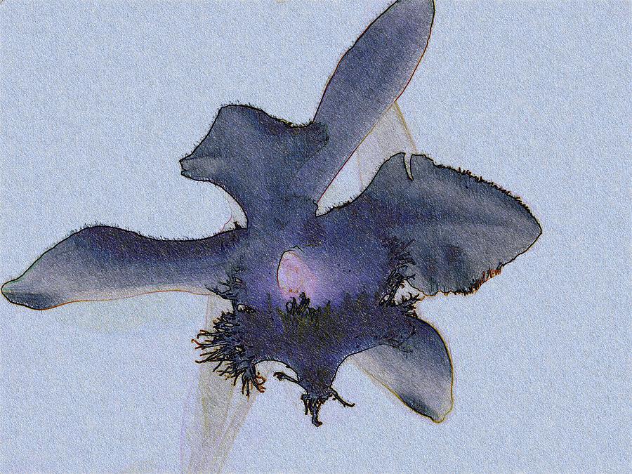 Digital Photograph - Blue Orchid by Dafina Stojanova