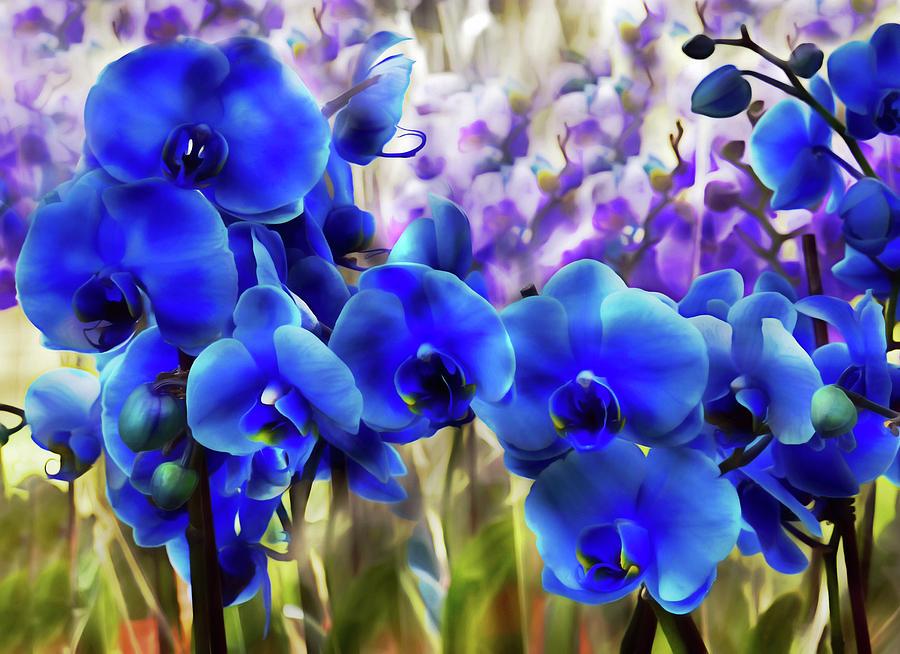 Blue Orchid Garden Wall Art Digital Art by Georgiana Romanovna