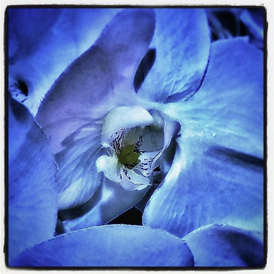 Blue Orchids. They Represent Strength Photograph by Mr Photojimsf