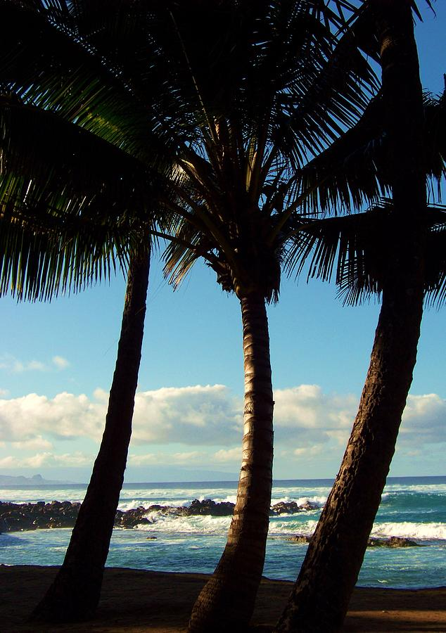 Palm Trees Photograph - Blue Palms by Karen Wiles