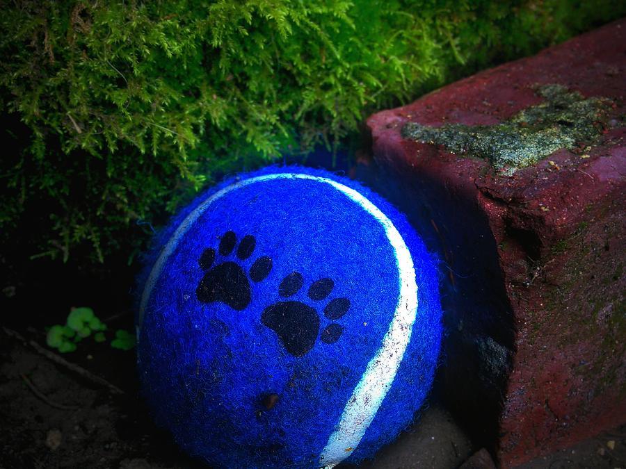Tennis Photograph - Blue Paws Tennis Ball by Eddie G