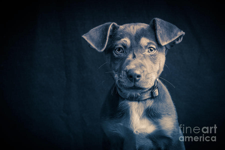 Blue Period Puppy Photograph By Edward Fielding