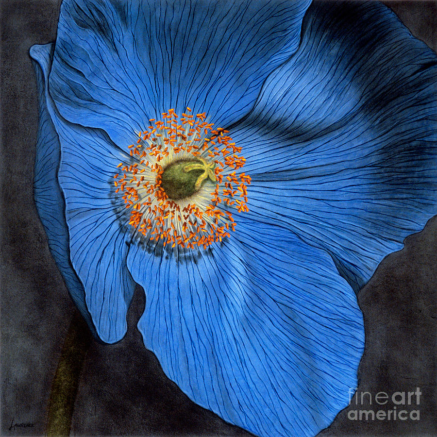 Blue Poppy Painting By Lawrence Supino