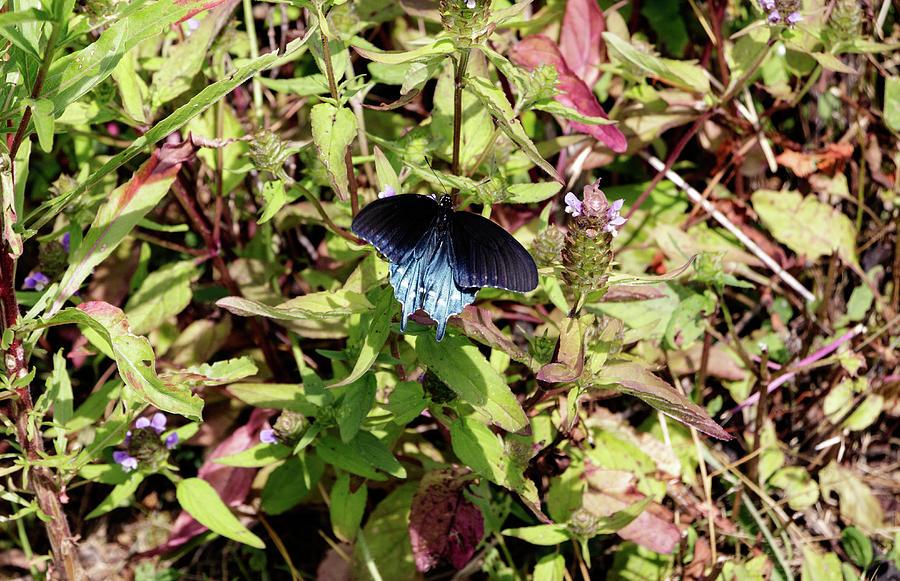 Blue Ridge Butterflies 2 by Matt Sexton